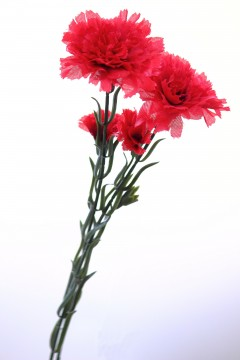 カーネーションの造花4