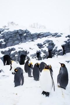 雪の中のペンギン