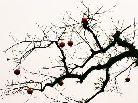 柿の木と空