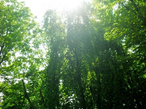 光が差す森