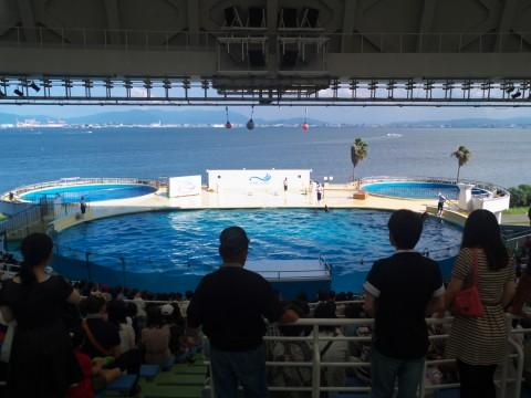 イルカショーと観客