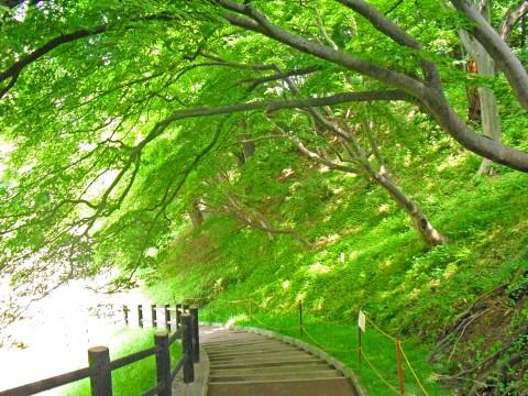 緑蔭の階段