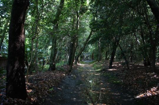 鬱蒼と茂る神社の森