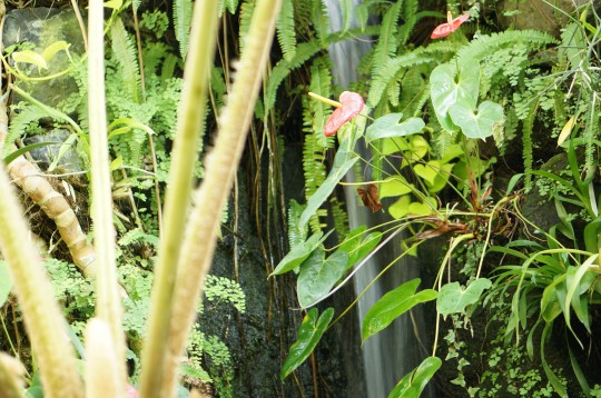 温帯のジャングル