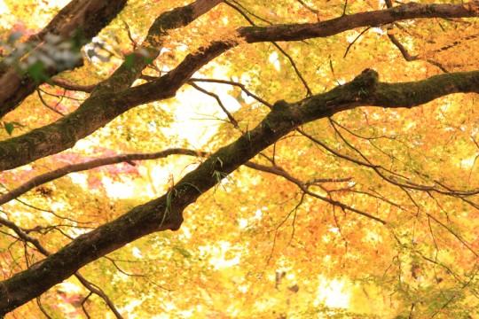 秋の景色002y