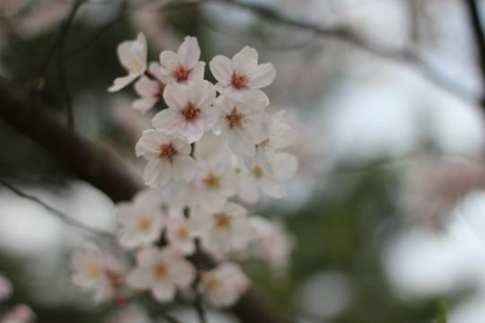 お花見の時の写真