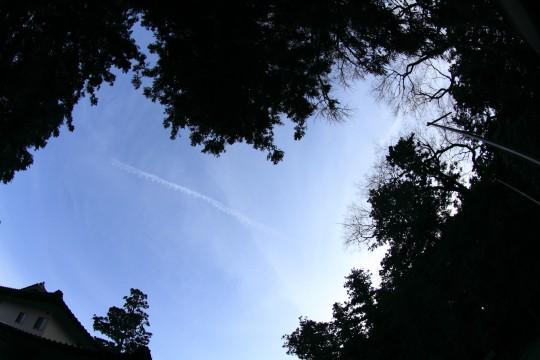 青空と木と屋根