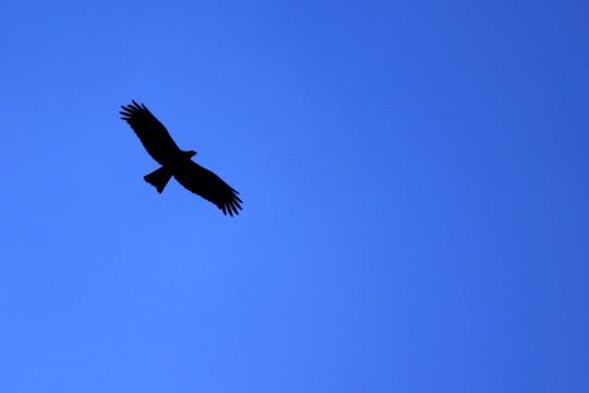 青空と鳥 青空と鳥 Home 写真 365日365枚 青空と鳥 コメント|Comment 青空を