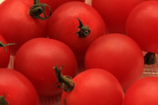 たくさんのプチトマト