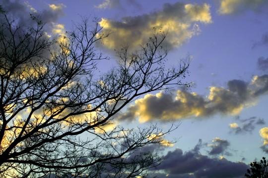 冬の木と夕方の空