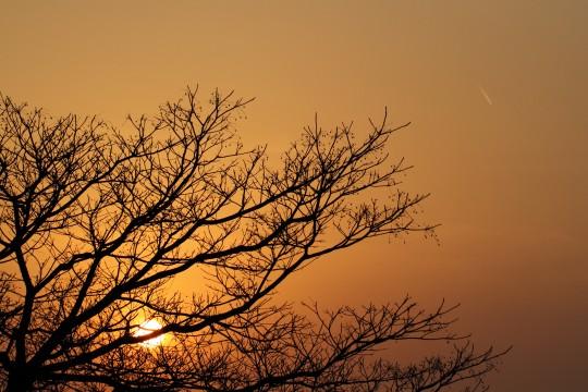 冬の木と沈む太陽