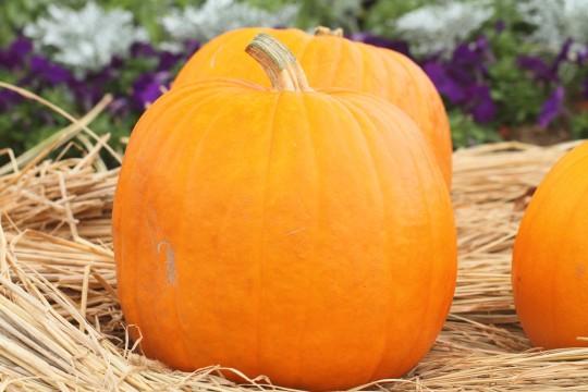 ハロウィンの大きなかぼちゃ6