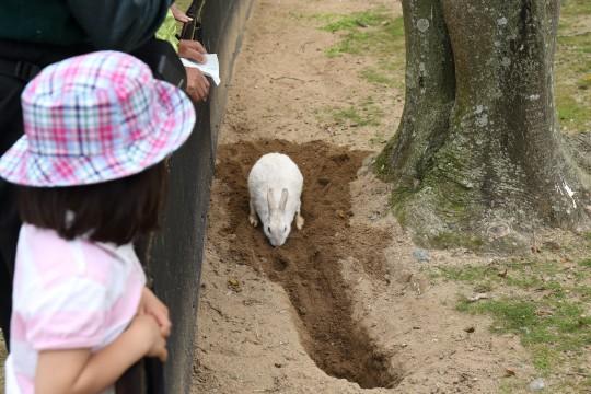 穴を掘るウサギと眺める少女
