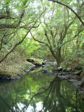 種子島 男淵女淵の滝へと続く森