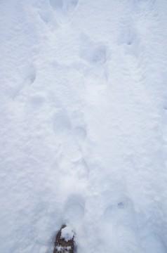 雪についた足あと