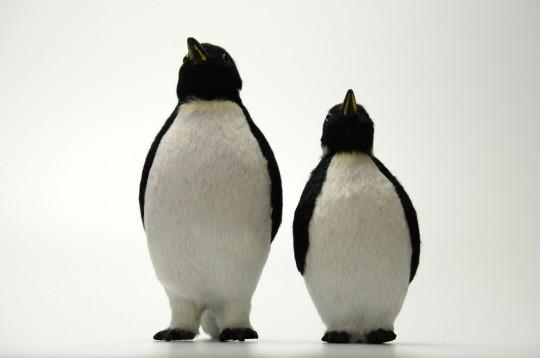 並び立つペンギンの人形