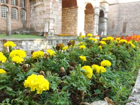 アヤソフィア前の花