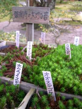 銀閣寺の苔