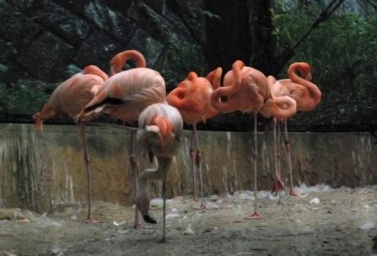 フラミンゴの群れ2