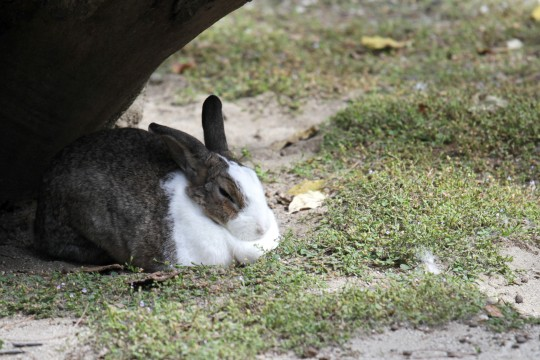 寝てるウサギ3