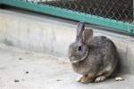 茶色いウサギ3