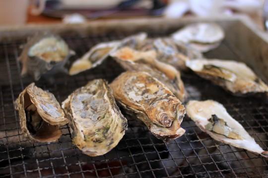 かき小屋の牡蠣