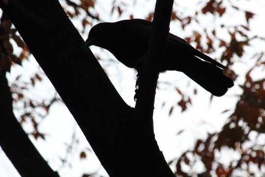 鳥のシルエット2