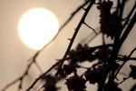 沈む夕日と梅の花