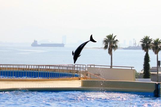 イルカのジャンプ