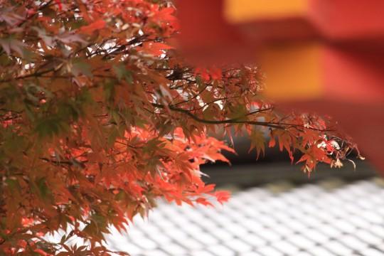 秋の景色003y