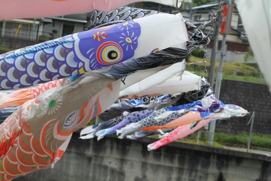 たくさんの鯉のぼり4
