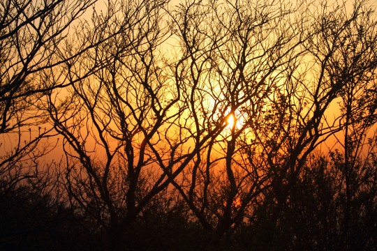 夕日と木のシルエット