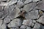 石垣に生える木の根