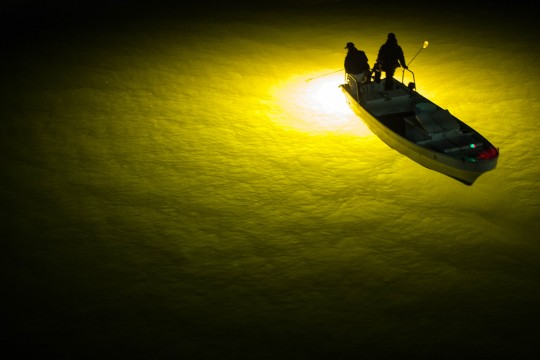 真夜中のシラス漁