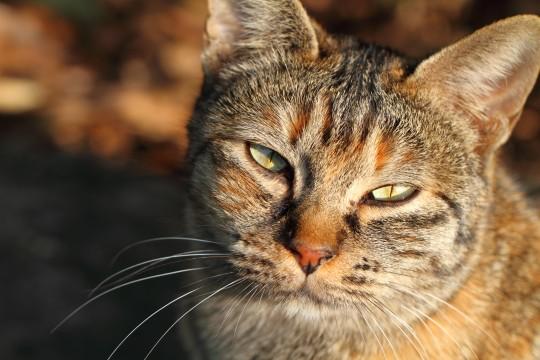 眩しそうなネコ