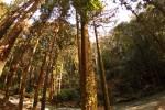 苔の生えた木と川の流れ