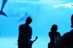 イルカの水槽と親子