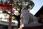 神社の狛犬