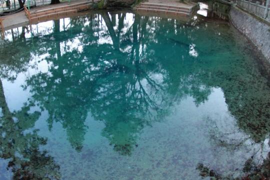 水に映り込んだ木