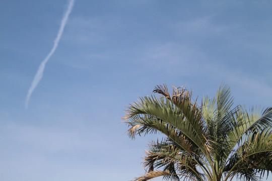 青空と飛行機雲とソテツ