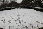 雪に残った足跡