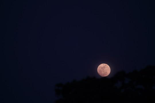 木の影と満月