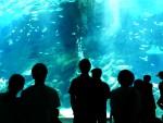 大きな水槽を観る人たち