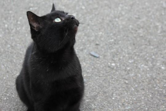 見あげる黒猫