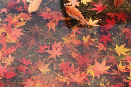 水の中の落ち葉