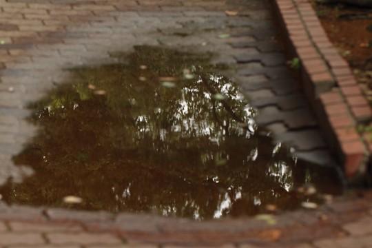 水溜りの中の緑