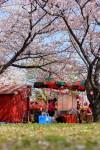 花見と屋台