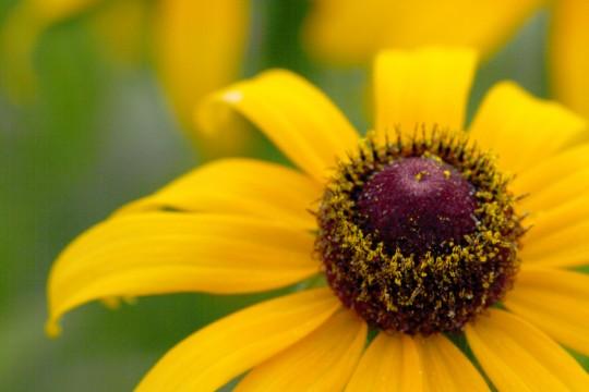 黄色い花3