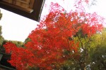 神社の屋根と真っ赤な紅葉