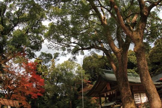 たくさんの木々に囲まれた竈門神社